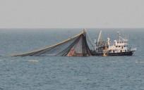 Ordulu Balıkçılar Hamsi Avı İçin Gürcistan'da Avlanmaya Devam Ediyor.