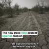 Pakistan ,Çorak Topraklarını 'Yeşil Altın' Diye Bilinen  Ormanlara Dönüştürmek için 1 Milyar Ağaç Dikiyor !