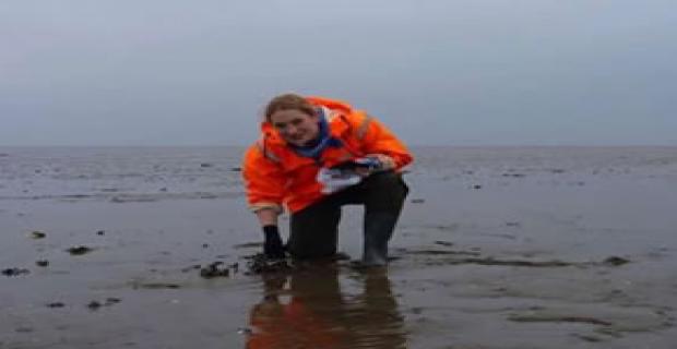 Deniz hayvanları sudaki virüsleri ortadan kaldırıyor