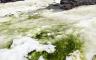 """İklim Değişikliği Antarktika'yı Yeşile """"Boyuyor"""""""