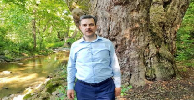 Bursa'daki bu çınar 1100 yaşında