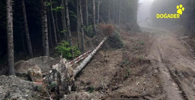 Pandemi Uludağ'da ağaç kıyımı getirdi