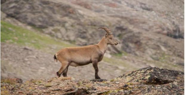 Av turizmi kapsamında 798 yaban hayvanı öldürülecek