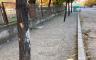 Belediyeden ağaç köklerine beton