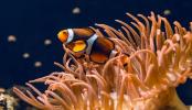 Küresel ısınma, deniz yaşamının kaynağı olan mercan resiflerini yok ediyor