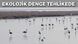 ekolojik-denge-tehlikede-2016-02-27_m