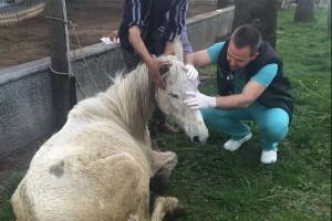 Bursa'da Aç ve Bakımsız Hayvana Sahibi Tarafından Yapılan İşkence