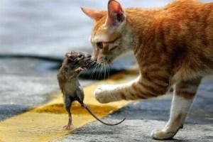 kedi-fare-oyunu