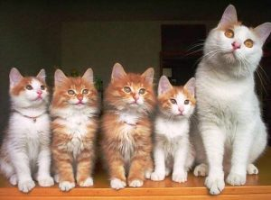 blog_anne-kedi-ve-dort-tane-sevimli-yavrusu1