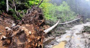 Doğa ve yaban hayatı koruma'da sondan dördüncüyüz