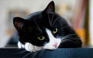 kedi-hastaligi