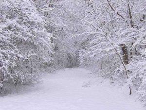 Bu yıl kar yaklaşık 40 gün erken yağdı