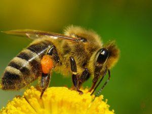 Yurda kaçak sokulan arılar imha edildi