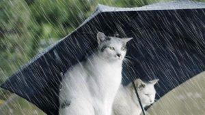 Kuvvetli Yağışlar Geliyor Hava Sıcaklığı Düşüyor