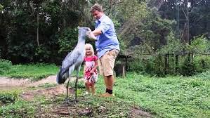 Onu gören heykel sanıyor: Papuç gagalı ukala kuş