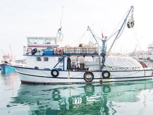 Balıkçılar Yüzde 80'lik Düşüşün Araştırılmasını İstiyor