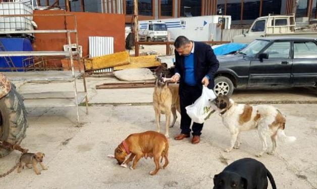 Bursa'da 'Hayvansever Savcı' Yılın İlk Gününde Sokak Hayvanlarını Besledi