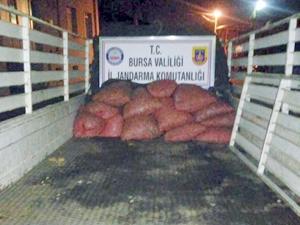 Bursa'da Kaçak Avlanan 300 Kilo Kum Midyesi Ele Geçirildi