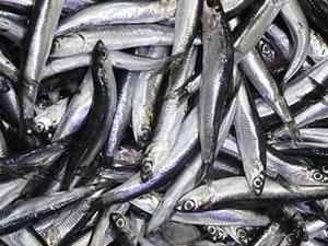 Üç Balık türü Resmi Gazete'de Yayınlanarak Tescillendi