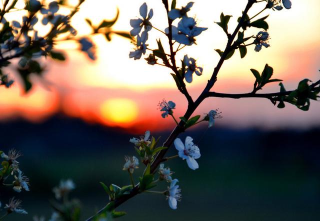 Kışı Göremeden Bahar geliyor: İlk Cemre Bugün Havaya Düştü