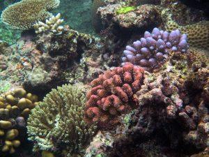 """Bilim İnsanları Çağrıda Bulundu: """"Mikroplastiklerin, küçük deniz canlılarıyla beslenen türlere etkisi araştırılsın."""""""