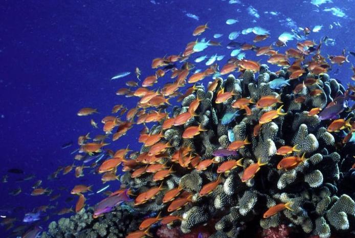 Okyanus  ve Göllerdeki Ölü  Alanlar  Geri  Dönüyor