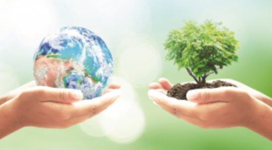 1 Ton  Kullanılmış Kağıt  Geri  Kazanıldığında  17 ağacın  Kesilmesi Önleniyor !