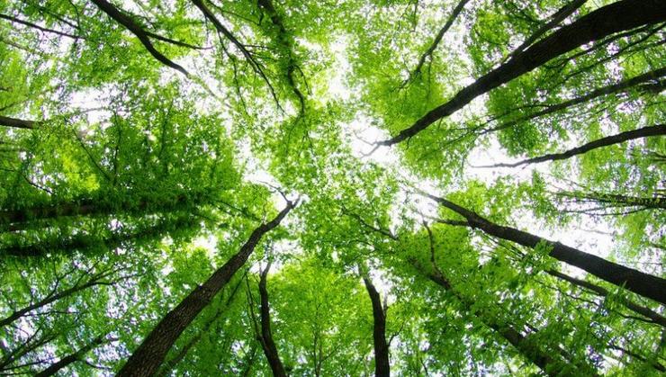 Norveç Tropik Ormanların Korunması İçin Diğer Ülkeleri Desteğe Çağırıyor
