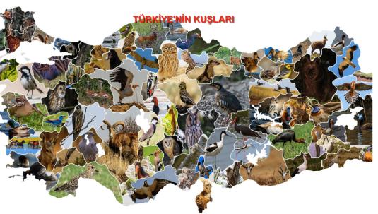 Türkiye'de 1.7 Milyon Kuş Var