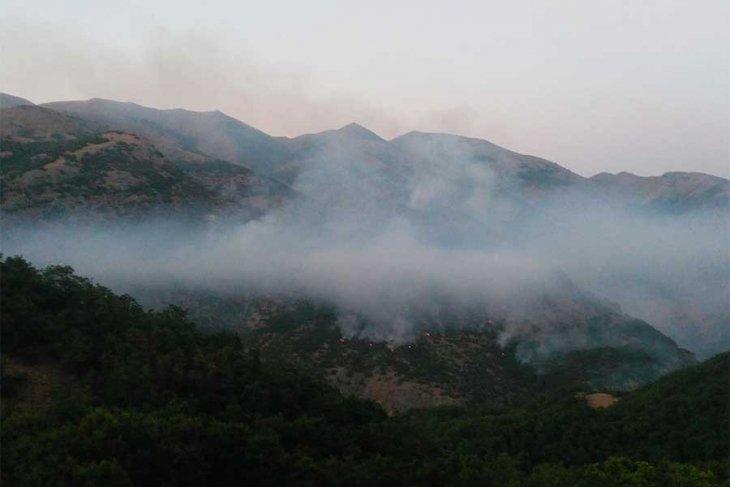 Tunceli'deki Yangından Ötürü Dağ Keçileri Bölgeden Çıkıyor