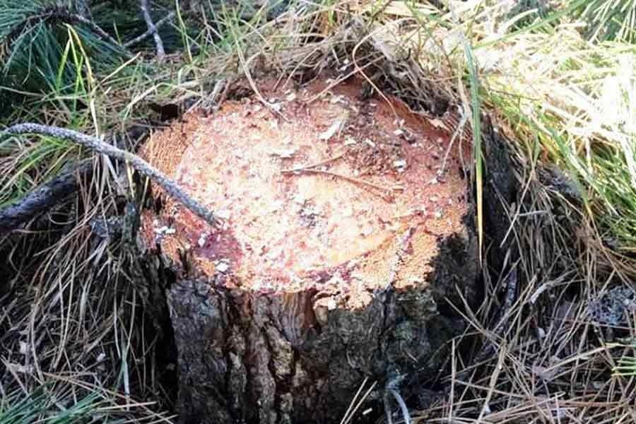 Isparta Tota Ormanlarındaki Ağaç Kesimi Yöre Köylülerinin Tepkisini Çekti.