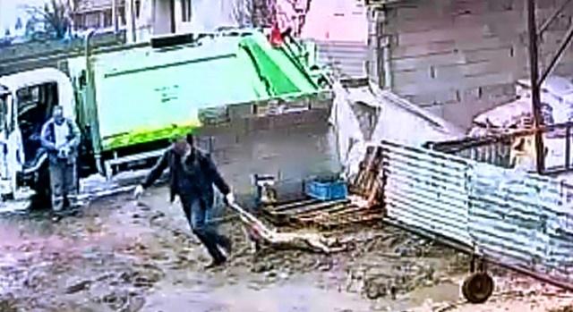 Isparta Belediyesi önce iğneyle vurdu, sonra çöpe attı! Vahşet.!!