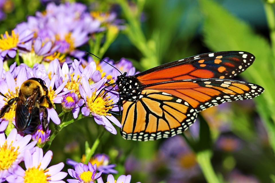 Son Yıllarda Böcek Türlerindeki Yoğun Azalmanın Sonuçları