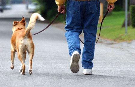 Dikkat ! Köpeğinizi Gezdirirken Yaralanabilirsiniz
