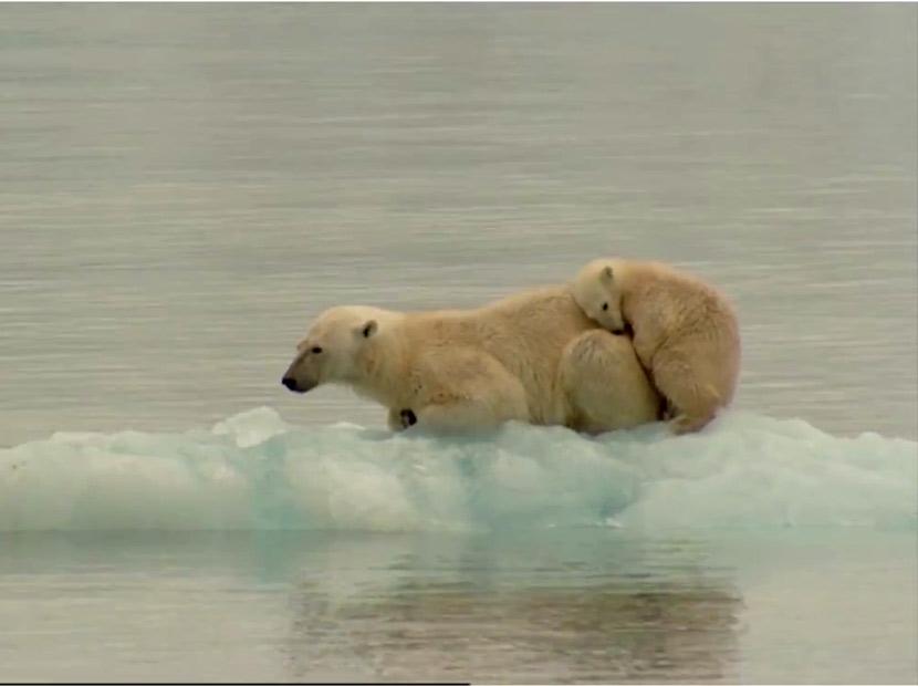 Küresel Isınmayı Durdurup, Kutupları Tekrar Dondurmak Mümkün Mü?