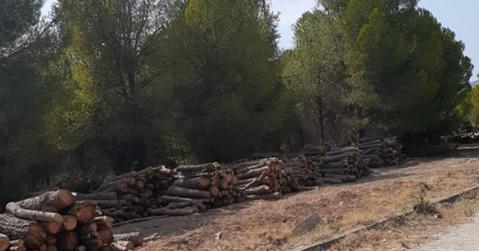 Ege Üniversitesi'nde 'millet bahçesi' için ağaç katliamı