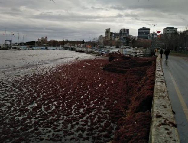 Marmara Denizi'nde kirlilik uyarısı: Bırakılan suyun yüzde 70'i arıtılmıyor