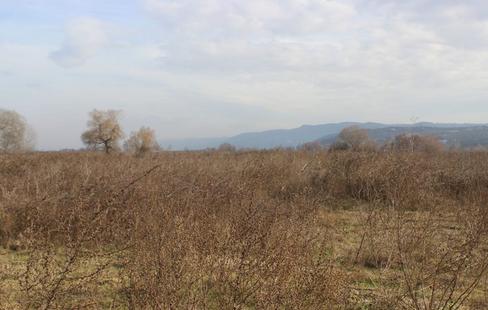 Bursa'da köyün merası var, ama hayvan otlatılamıyor