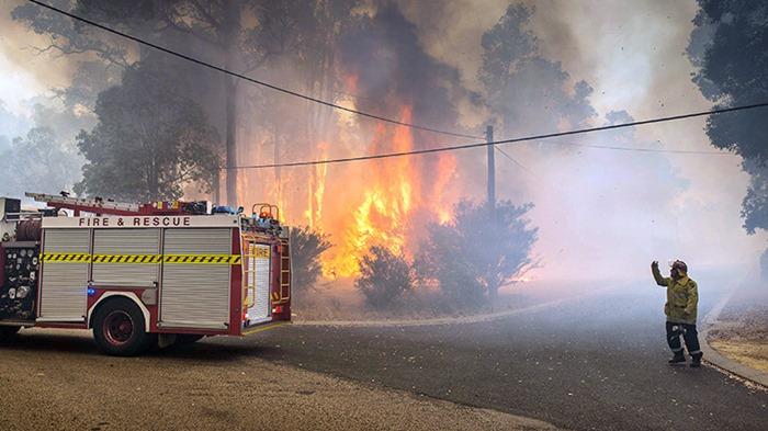 Avustralya tarihinin en büyük orman yangınında 480 milyon hayvanın can verdiği tahmin ediliyor
