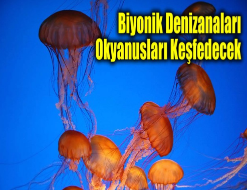 Biyonik Denizanaları Okyanusları Keşfedecek