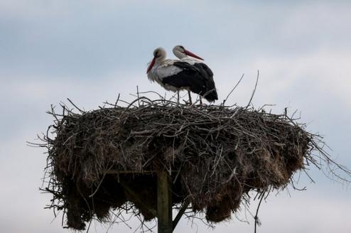 """Bursa'nın """"Leylek Köyü"""" Eskikaraağaç kuş cenneti olacak"""