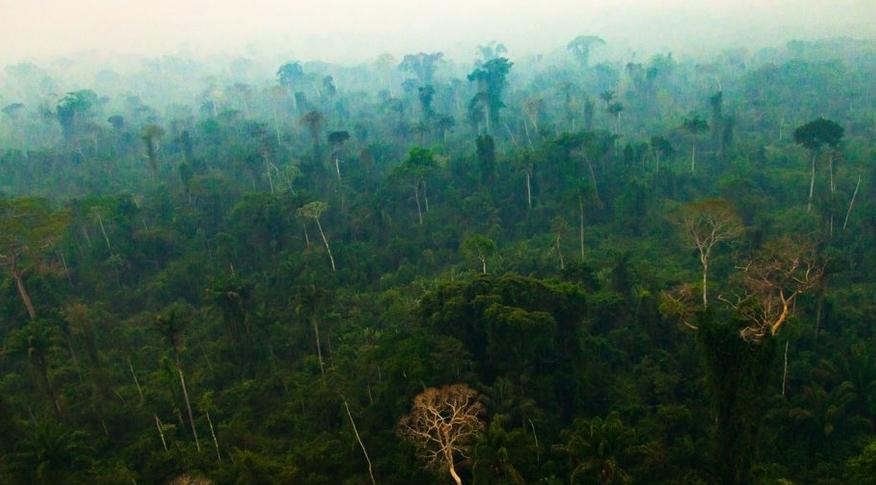 Tropikal Ormanlar Karbon Emme Kabiliyetini Yitiriyor