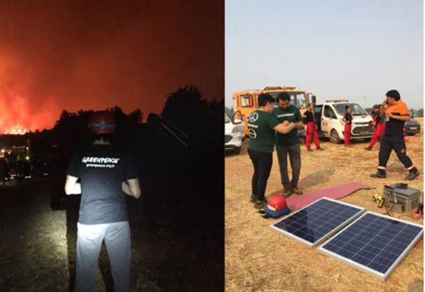 'Greenpeace Türkiye'den Orman Yangınlarına Yönelik Bilgilendirme